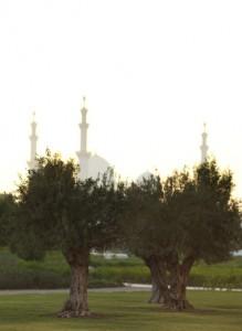 Ritz_Abu_DhabaiGC_00031_Gallery